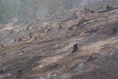 Waldbrand-Leppen-Tag-2-155